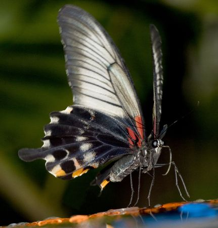 feeder: tropical butterfly on feeder