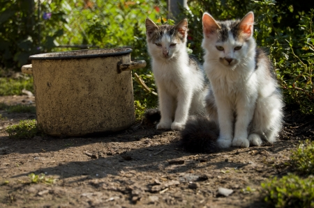 two cats in the yard near a large pot