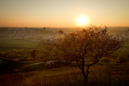 city at sunset with a tree in the foreground  Ukraine  Ivano-Frankivsk Banque d'images