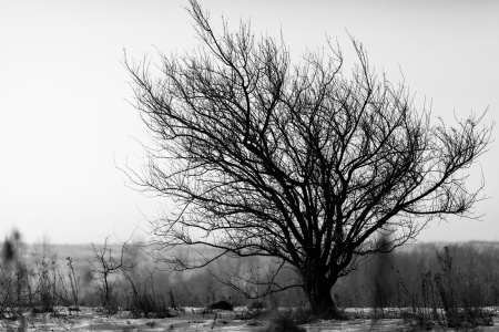 One tree among field  Black and white  Banque d'images