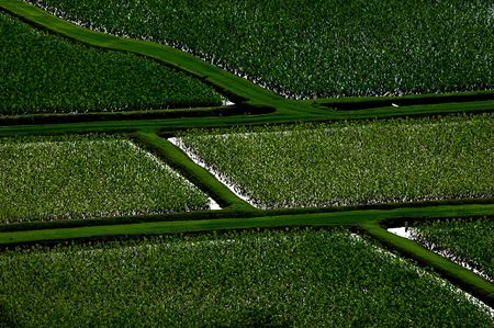 taro fields in hanalei river valley kauai