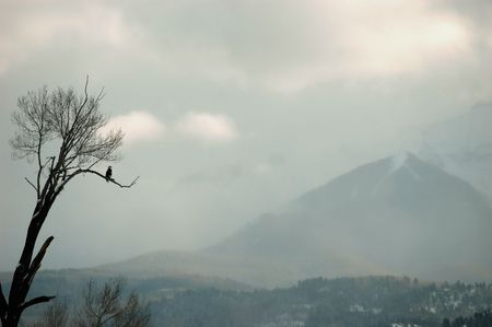 bald eagle on perch overlooking distant fog shrouded mountain