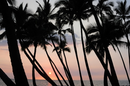 glowing sun above ocean seen through grove of coconut trees