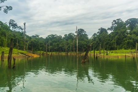 tree dead: Albero morto e riflessione foresta pluviale
