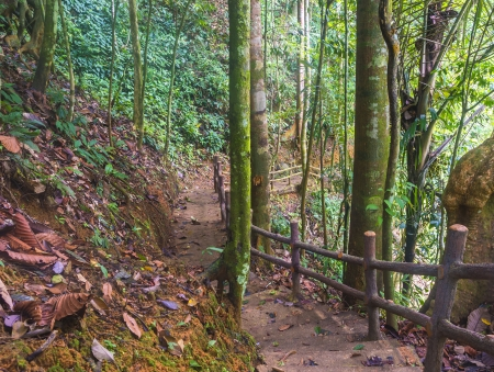 Walkway and track at tropical forest photo