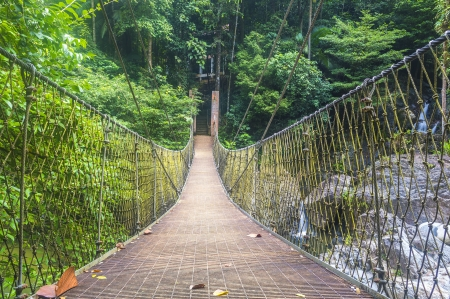 affraid: Suspended bridge at forest