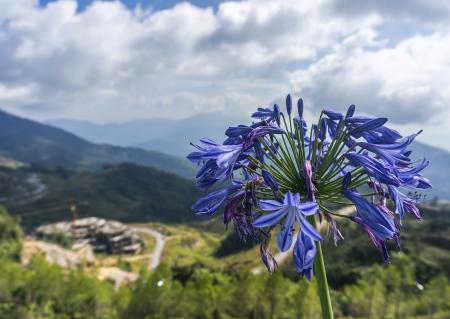 Purple flower with mountain background Banco de Imagens