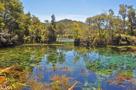 cielos azules: Pantano y el �rbol con el cielo azul Foto de archivo