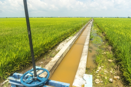 Water Control valve at paddy field photo
