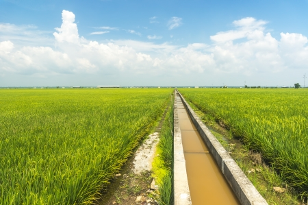 Water supply for paddy plant photo