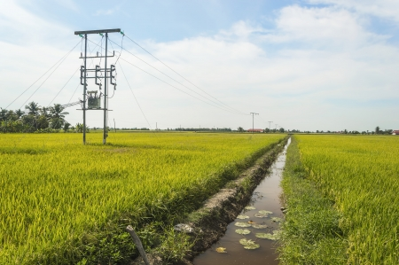 Electric pole on a paddy field with blue sky photo