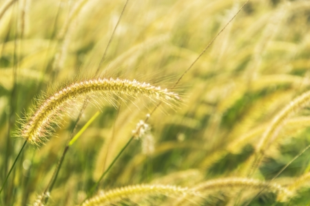 Wild grass with morning sun ray and bokeh background photo