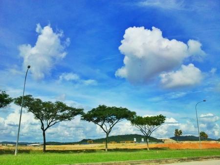cielos azules: �rbol con el fondo un cielo azul