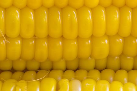 corn ear: mazorca de ma�z amarillo, de cerca macro superficie vista superior de fondo