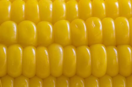 corn ear: mazorca de ma�z amarillo, de cerca macro superficie vista desde arriba fondo