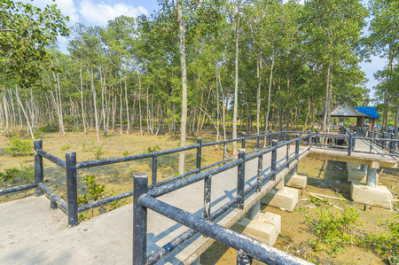 lightsome: Jetty and forest mangrove