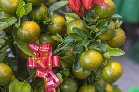 Limes and red ribbon with natural sun light photo
