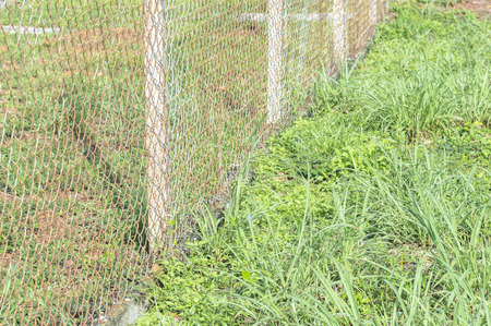 chain fence: Iron chain fence with green grass