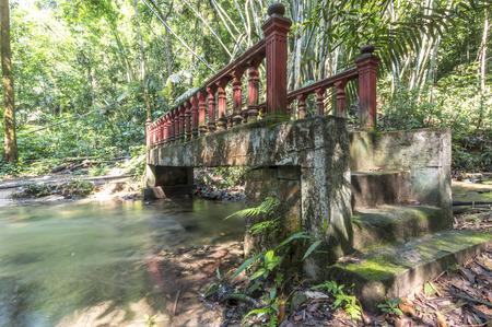 abandon: Abandon bridge in the forest