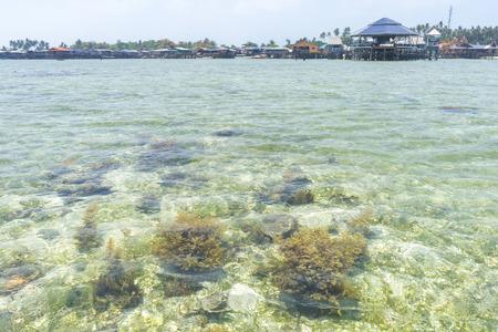 mabul: Shallow coral reef at Mabul Island, sabah, Malaysia