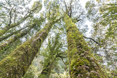 milford: Green moss on tree at Milford Sound, New Zealand Stock Photo