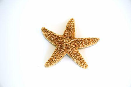 Single isolated starfish