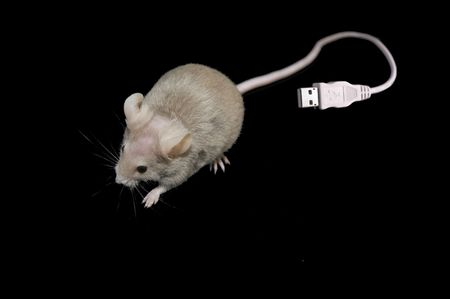 Mouse with USB tail photo