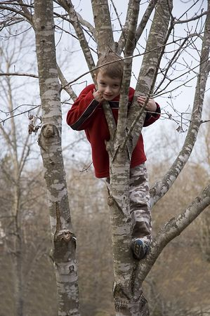 Small Boy Climbing Tree Stock fotó