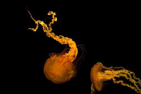 暗い背景に海のイラクサ 写真素材