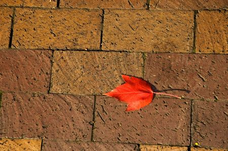 Closeup of cobble stone sidewalk with red leaf