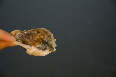 soft mullusk attached to abandoned shell