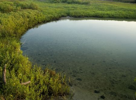 Small saltwater marsh surrounded by greenery with copy space in the water