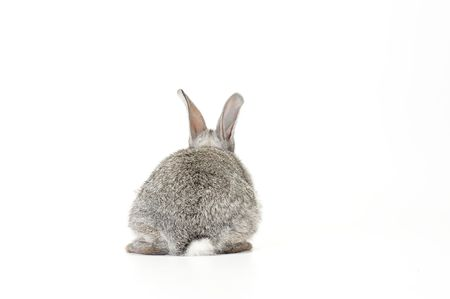 on gray: Cute gray baby rabbit on white background facing away Stock Photo