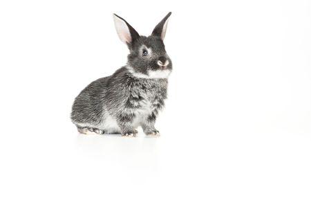 Cute baby rabbit on white background