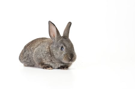 Cute brown baby rabbit on white background Imagens