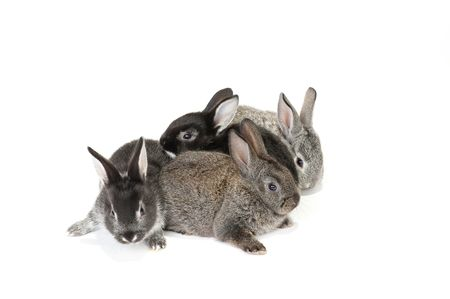 Four cute baby rabbits on white background photo