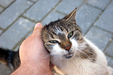 fondling: Young friendly kitty eager for fondling