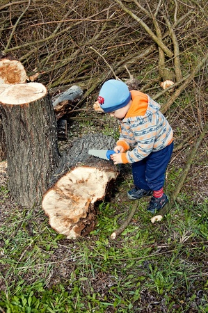 stretches of felled trees for three year old toy chainsaw photo