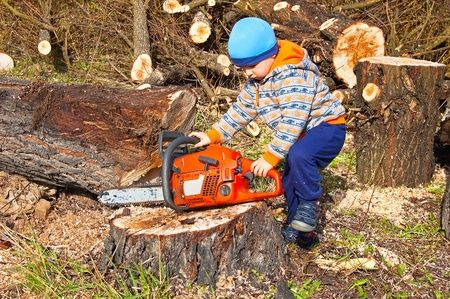 Saw in the hands of a small child when felling trees felled photo
