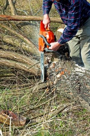 boom kappen: gebroken boom snijden dicht bij de grond