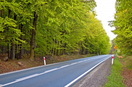 Long paved road maintained by deciduous forest