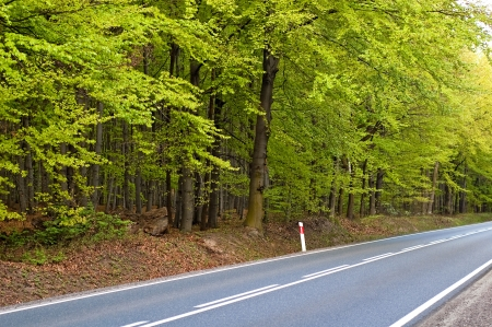 maintained: Long paved road maintained by deciduous forest