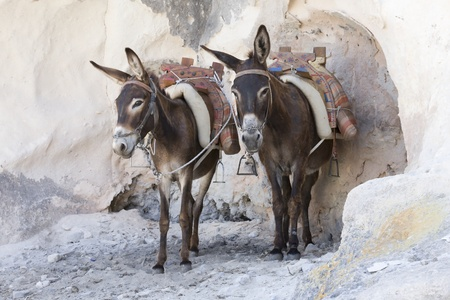 Donkeys in Lindos, Greece photo