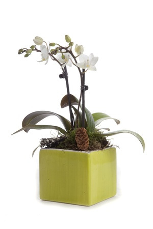 Phalaenopsis orchid table decoration photo