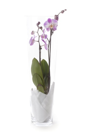 Phalaenopsis orchid table decoration photo