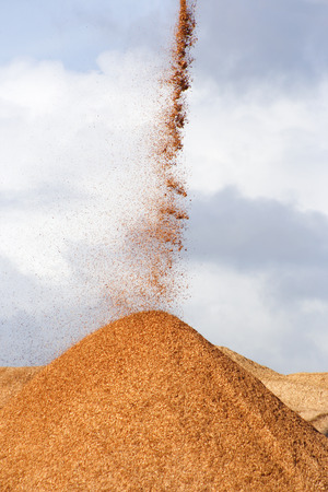 Pile of pouring wood chips photo