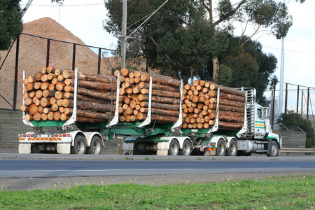 logging truck: Semi truck with logs for load