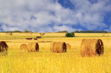 hay field: Straw hay bales