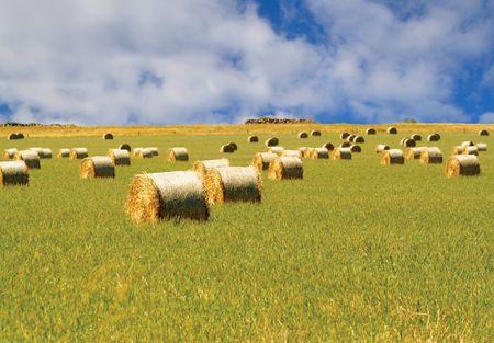 Straw hay bales Stock Photo - 2326691
