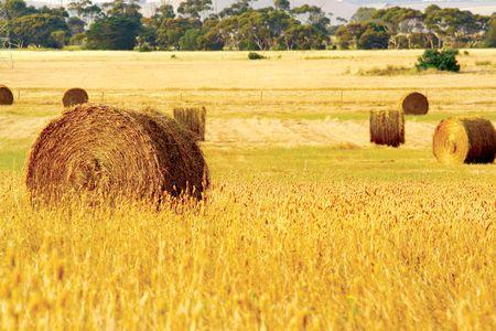 Straw hay bales Stock Photo - 2326693